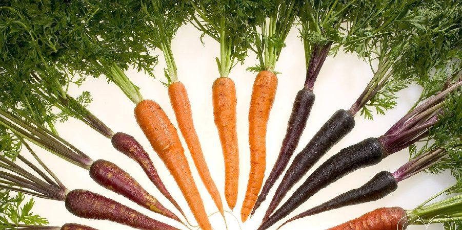 Dia Mundial Vegetarianismo – 1 de Outubro
